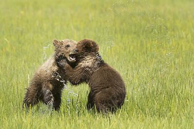 Alaska Photograph - Grizzly Bear  Ursus Arctos Horribilis by Daisy Gilardini