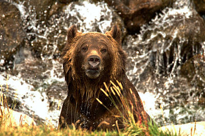 Photograph - Grizzly In The Falls by Adam Jewell