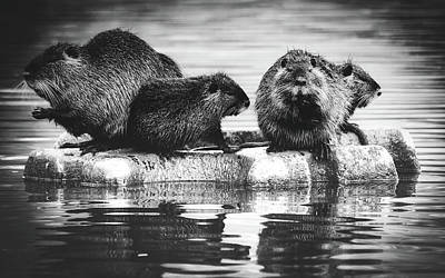 Photograph - Group Of Nutria by Pixabay