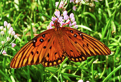 Photograph - Gulf Flittery Butterfly 011 by George Bostian
