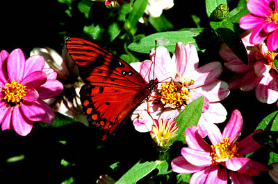 Photograph - Gulf Fritillary 5 by David Weeks