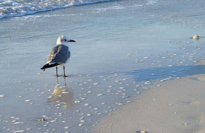 Photograph - Gull by Larah McElroy
