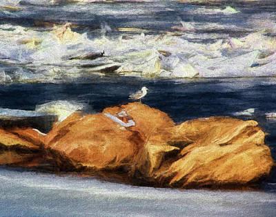 Photograph - Gull On The Rocks by John Freidenberg