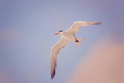 Photograph - Gull by Peter Lakomy