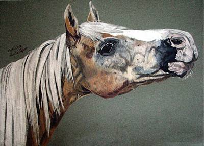 Art Print featuring the drawing Haflinger by Melita Safran