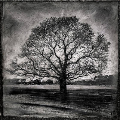 Mixed Media - Hagley Tree by Roseanne Jones