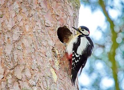 Photograph - Hairy Woodpecker Male Bird by Elenarts - Elena Duvernay photo