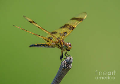 Photograph - Halloween Pennant by Cheryl Baxter