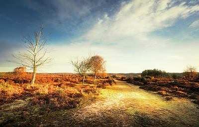 Photograph - Hampshire Landscape by Svetlana Sewell