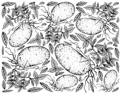 Purely Purple - Hand Drawn of Fresh Potatoes on A White Background by Iam Nee