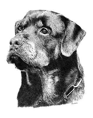 Rottweiler Dog Drawing - Hannibal by Carole Raschella