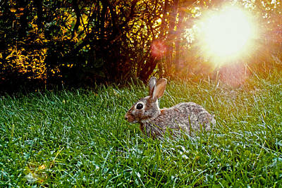 Rabbit Hunting Photograph - Happy Easter by Asbed Iskedjian