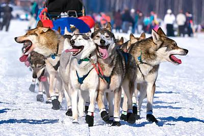 Iditarod Dogs Photograph - Happy, Happy, Happy by Ed Boudreau