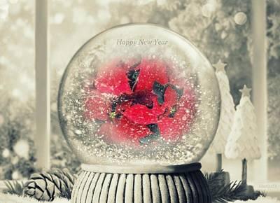 Photograph - Happy New Year by Marija Djedovic