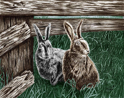 Pencil Drawing - Hare Line  by Peter Piatt