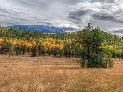 Photograph - Hart Prairie by Tam Ryan