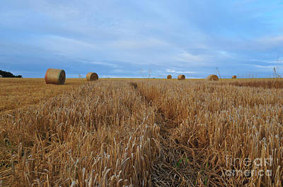 Bales Photograph - Harvest by Nichola Denny