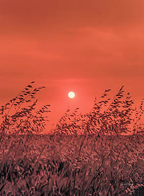 Photograph - Harvest Sun by Leland D Howard