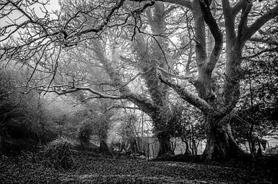 Haunted Houses Photograph - Haunted Forest by Britten Adams