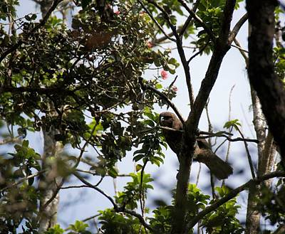 Photograph - Young Hawaiian Hawk  by Lehua Pekelo-Stearns