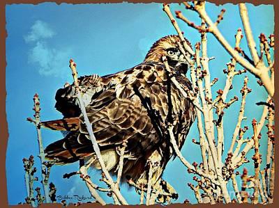 Photograph - Hawk Eye  by Bobbee Rickard