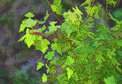 Digital Art - Hawthorn Leaves In Green by Aliceann Carlton
