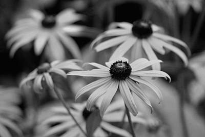 Photograph - He Loves Me, He Loves Me Not by Living Color Photography Lorraine Lynch