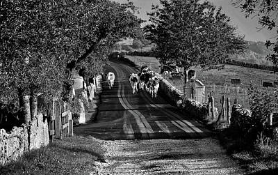 Photograph - Heading Home by Pixabay
