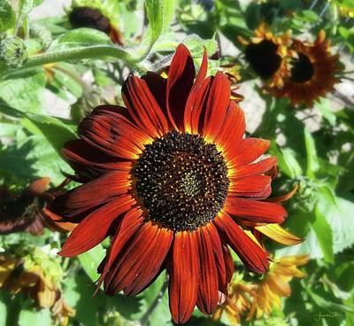 Photograph - Hearts On Fire Sunflower by Amanda Smith