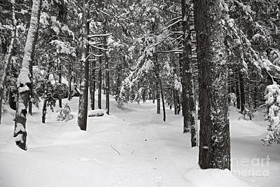 Photograph - Heavy With Snow by John Stephens
