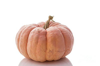 Photograph - Heirloom Pumpkin by Juli Scalzi