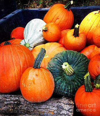 Photograph - Heirloom Pumpkins by Angela Rath