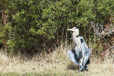 Saltlife Photograph - Henry The Heron by Benanne Stiens