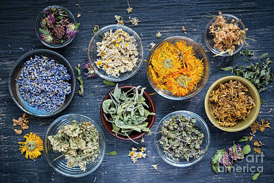 Photograph - Herbs by Elena Elisseeva