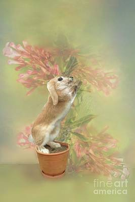 Digital Art - Here Comes Peter Cottontail by Janette Boyd
