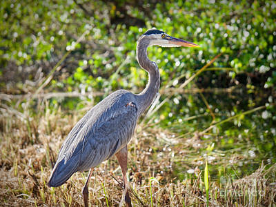 Photograph - Heron By The Riverside by Judy Kay