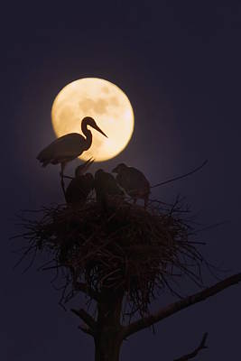 Photograph - Heron Nest With Full Moon by Dale J Martin