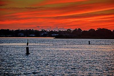 Photograph - Heron Waiting For The Sunrise by Michael Thomas