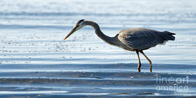 Photograph - Herons Beach by Sue Harper