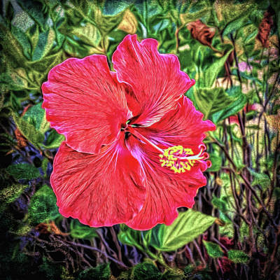 Art Print featuring the photograph Hibiscus Flower by Lewis Mann