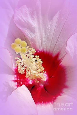 Photograph - Hibiscus by Judi Bagwell