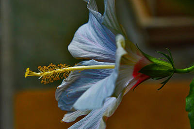 Passiflora Digital Art - Hibiscus Stigma. by Andy Za