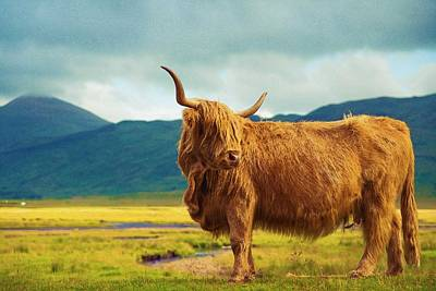 Painting - Highland Cow by Celestial Images