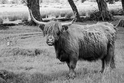 Scottish Photograph - Highland Cow by Chris Dale