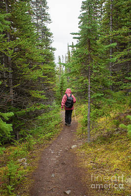 Antlers - Hiking rainy autumn fall boreal forest taiga trail by Stephan Pietzko