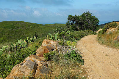 Photograph - Hiking Trail by Carlos Caetano