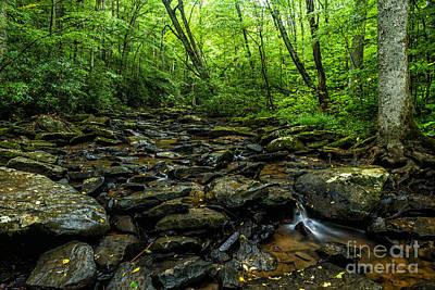 Blue Hues - Hills Creek Monongahela National Forest by Thomas R Fletcher