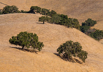 Photograph - Hillside Oaks by Derek Dean