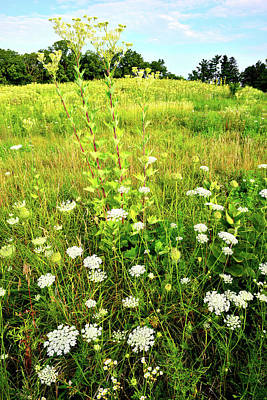 Photograph - Hillside Of Wildflowers In Marengo Ridge by Ray Mathis