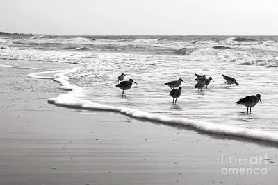 Photograph - Plundering Plover Series In Black And White 6 by Angela Rath
